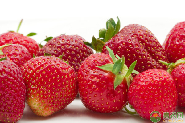草莓青头不着色现象