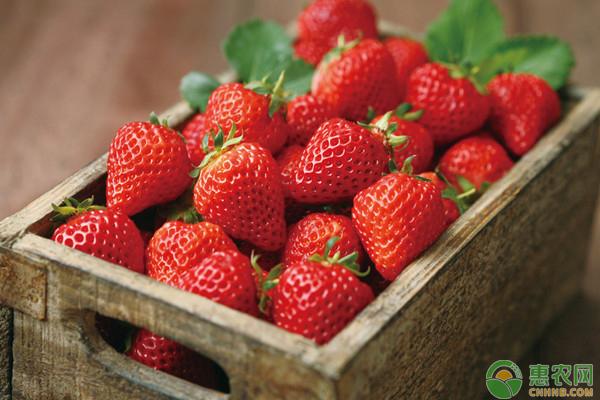 草莓青头不着色改善措施