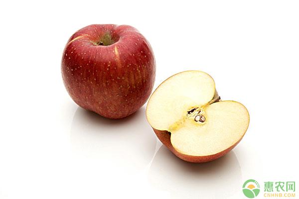 苹果腐烂病防治方法