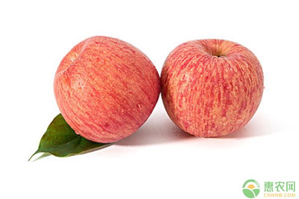 苹果腐烂病治疗方法