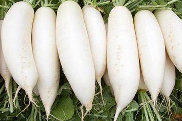 秋冬季节,萝卜多少钱一斤?最新萝卜价格行情汇总