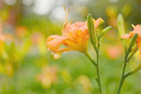 """这些很""""爷们儿""""的花在寒冬室外也能存活,花友们就放心大胆的养吧!"""
