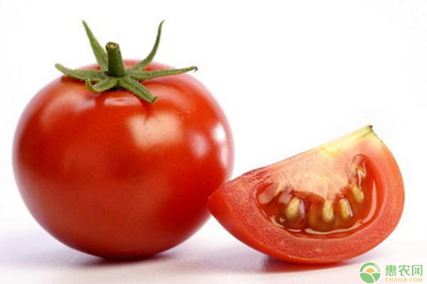 西红柿脐腐病症状