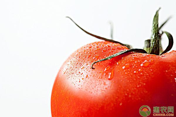 西红柿病害