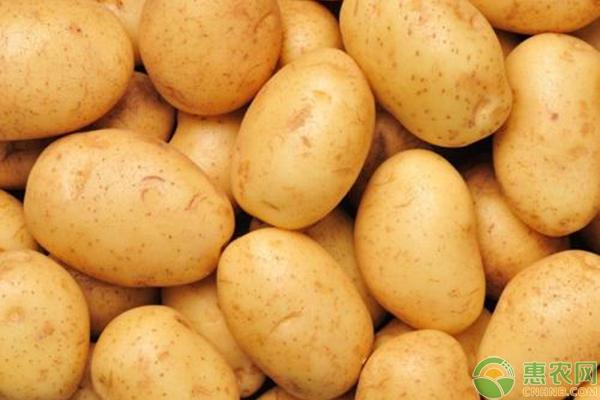 土豆掌握教程多,种植这几点,种出又大又圆的土厄技巧钢琴基本拜视频下载图片