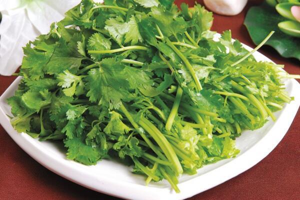 今日香菜多少钱一斤?受冷空气影响,香菜价格可能有时上涨