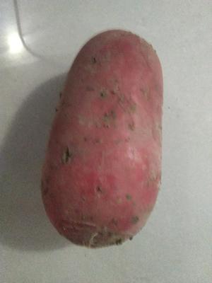 湖北省恩施土家族苗族自治州宣恩县满身红萝卜 0.2~1斤