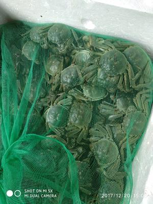 湖南长沙开福区兴化大闸蟹 2.0两以下 母蟹