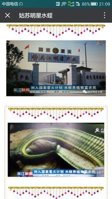 江苏苏州吴江市宽体金线蛭