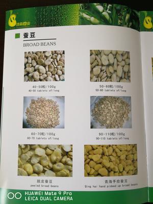 青海西宁湟中县青海蚕豆