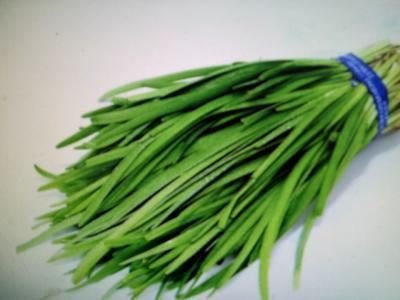 广东省广州市花都区小叶韭菜 二茬 20~30cm