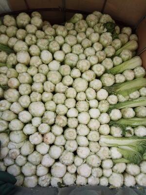 山西省晋中市榆次区麻叶青白菜 6~10斤 净菜