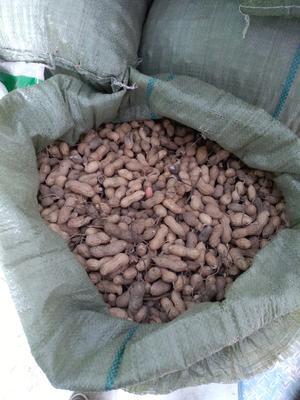 河南三门峡灵宝市花生果 袋装 6-12个月
