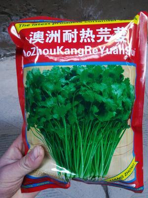 河北省邯郸市魏县香菜种子