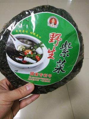 山东滨州滨城区霞浦紫菜