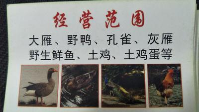 安徽芜湖无为县鸿雁