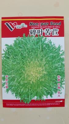 内蒙古赤峰元宝山区苦苣种子