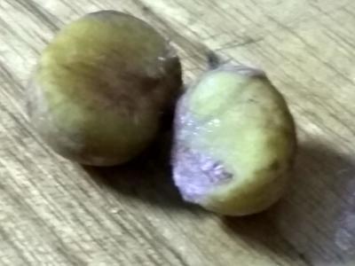 广西柳州柳北区野生板栗 统货 中粒