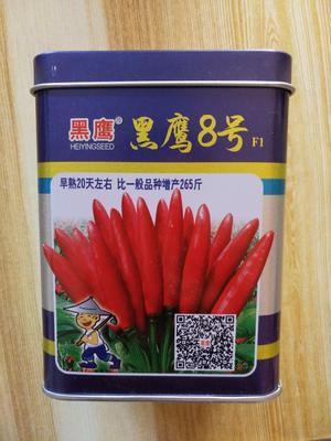 河北保定清苑县朝天椒种子 90%以上 原种