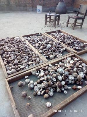 这是一张关于随州香菇 3.5~4.0cm 混级统货的产品图片