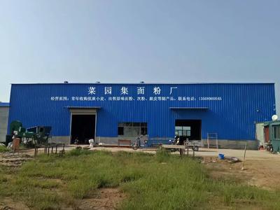 山东菏泽东明县黄粉标粉