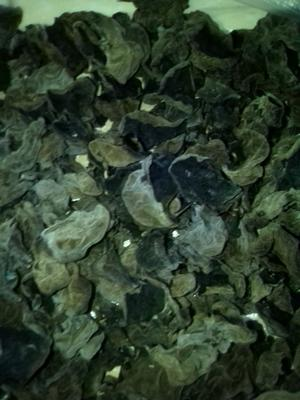 黑龙江牡丹江海林市干黑木耳 半年