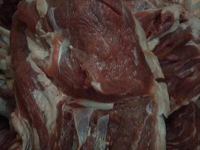 河北廊坊香河县羊肉类 3-6个月 生肉