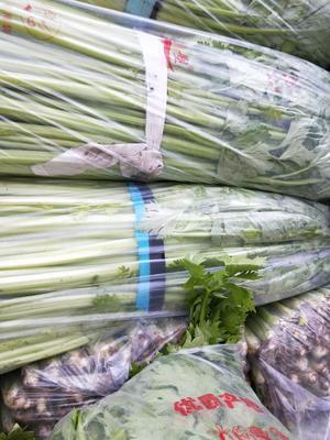 江苏省徐州市铜山区皇妃芹菜 50~55cm 大棚种植 0.5斤以下