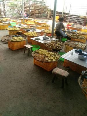 广西桂林平乐县红薯干 条状 袋装 1年