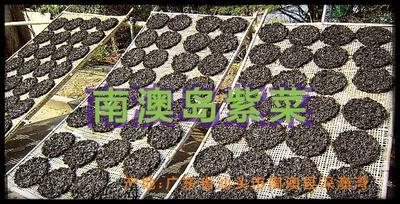 广东省汕头市南澳县二水紫菜