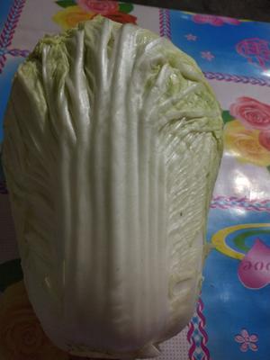 吉林省长春市农安县环球白菜 10~15斤 毛菜