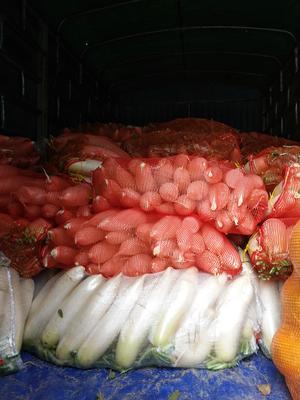 海南乐东乐东韩国白萝卜 2.5~3斤