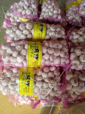 山东济宁金乡县金乡大蒜 5.0cm 多瓣蒜