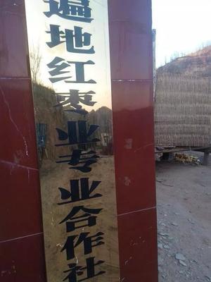 陕西榆林清涧县黄河滩红枣 特级