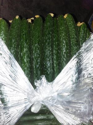 陕西延安安塞县带刺黄瓜 22~25cm 鲜花带刺