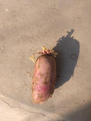 江苏徐州新沂市三红红萝卜 0.2~1斤