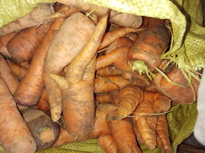 安徽省宿州市萧县三红胡萝卜 10cm以下 2两以下 3cm以下