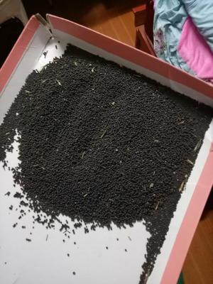 安徽六安霍邱县油菜籽