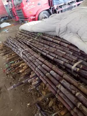 河北邯郸永年县红甘蔗 2.5 - 3m 4 - 5cm