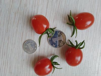 山东青岛平度市鲜泡椒 10~15cm 微辣