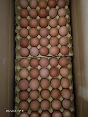 河南安阳滑县普通鸡蛋 食用 散装