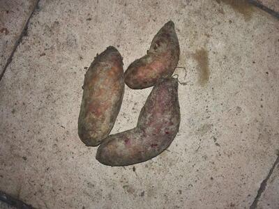 广东广州花都区红心红薯 红皮 1~3两