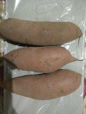 辽宁大连瓦房店市红心红薯 红皮 3两以上