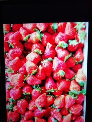 山东临沂莒南县美国甜查理草莓 30克以上