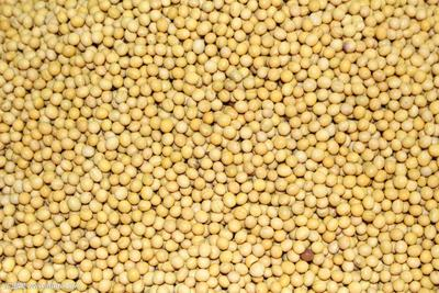这是一张关于东北黑龙江大豆 生大豆 3等品的产品图片