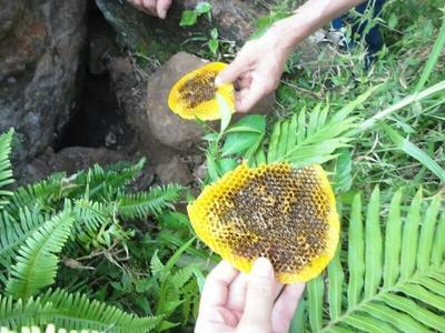广西南宁兴宁区野生蜂蜜 散装 100% 2年以上