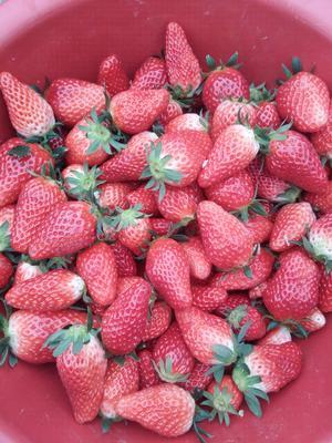 上海奉贤奶油草莓 20克以下