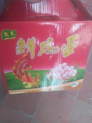 山东潍坊临朐县普通鸡蛋 食用 箱装