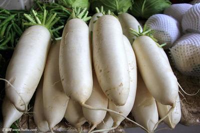 重庆巫溪县白萝卜 1~1.5斤