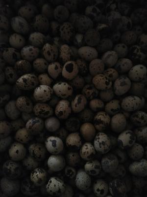 云南省红河哈尼族彝族自治州弥勒市土鹌鹑蛋 食用 散装